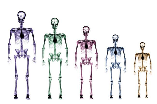 BMI verschillende personen